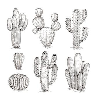 Cactus dessiné à la main