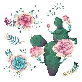 Cactus dessinés à la main sur un fond blanc