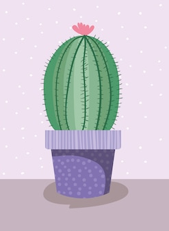 Cactus house plant en pot