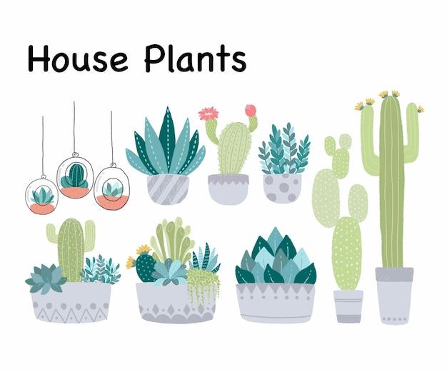 Cactus et plantes succulentes dans le pot