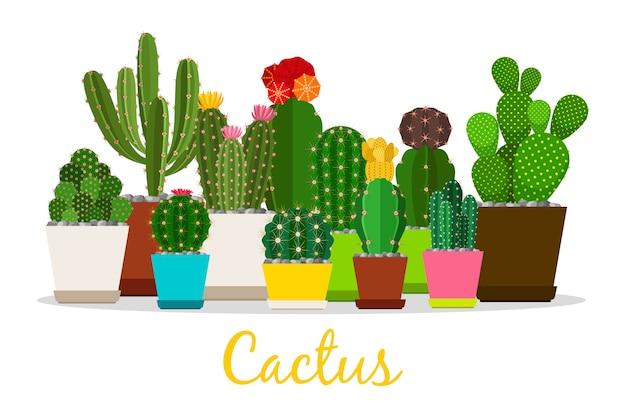 Cactus, plantes succulentes en illustration de pots