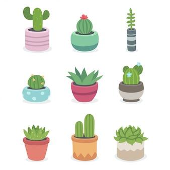 Cactus et plantes succulentes en pots