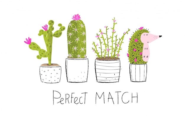 Cactus en pot et cachant le hérisson