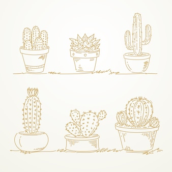 Cactus en pot, croquis dessinés à la main