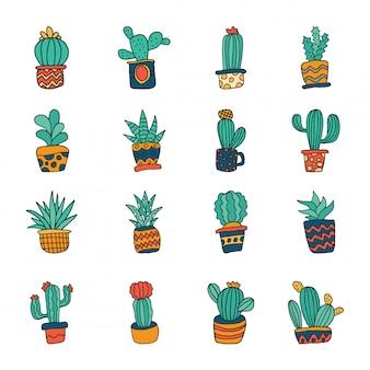 Cactus succulent