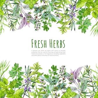 Cadre avec aquarelle herbes et plantes de cuisine
