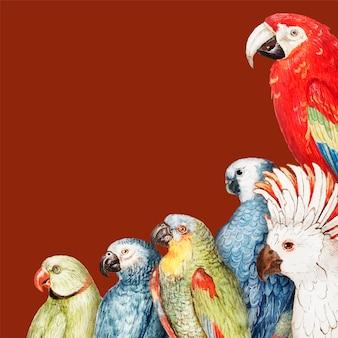 Cadre de bordure de perroquets