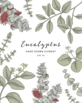 Cadre botanique plante eucalyptus illustration dessinée à la main