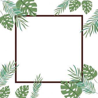 Cadre, branche, feuille, été, fond blanc