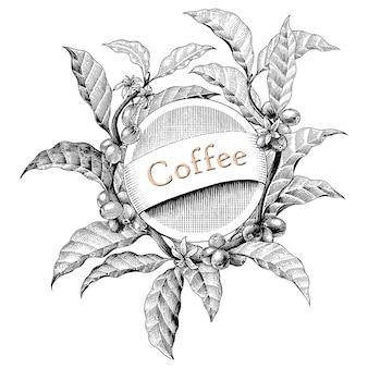 Cadre de café dessin à la main gravure vintage style logo illustration