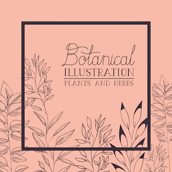 Cadre carré plantes et herbes botaniques