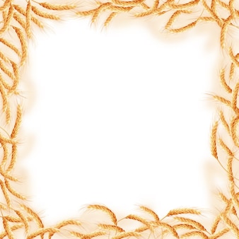 Cadre composé de différents blés.
