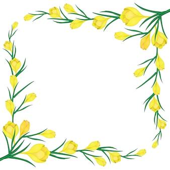 Cadre avec crocus jaunes