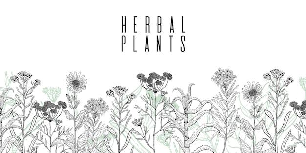 Cadre avec dessin de plantes sauvages