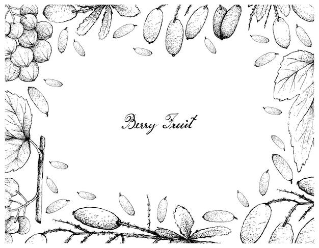 Cadre dessiné à la main d'ampelocissus latifolia et barberries