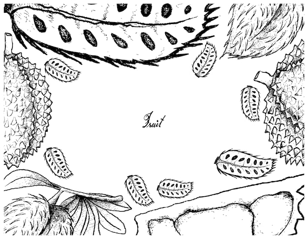 Cadre dessiné à la main de corossol et de fruits durians
