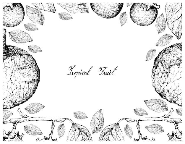 Cadre dessiné à la main de feroniella lucida et fruits d'ébène