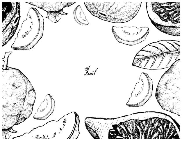 Cadre dessiné à la main de figue fraîche et de goyave