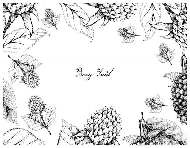 Cadre dessiné à la main de framboises noires de corée et de kotataberries