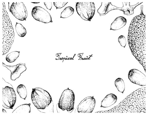 Cadre dessiné à la main de fruits buah dabai et cempedak