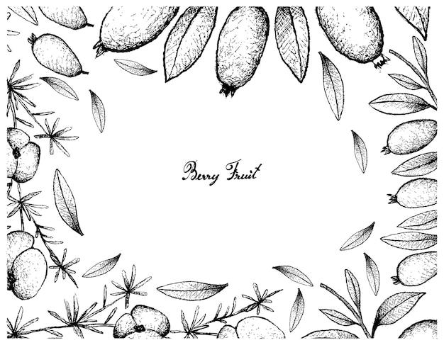 Cadre dessiné à la main de fruits de fougère d'asperge et de fruits arrayan