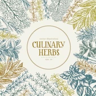 Cadre dessiné à la main d'herbes et d'épices culinaires.