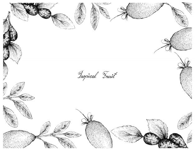 Cadre dessiné à la main de jujube ou lang fruits