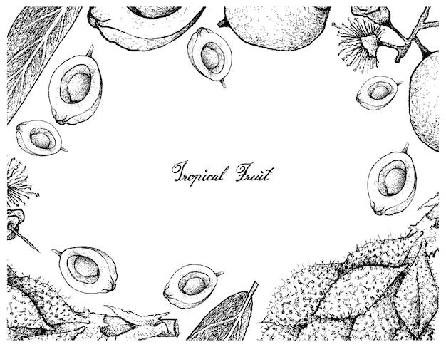 Cadre dessiné à la main de luk rakam et syzygium jambos