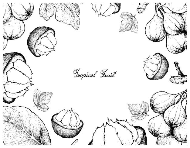 Cadre dessiné à la main de santol mûr et de grappe de fruits mûrs