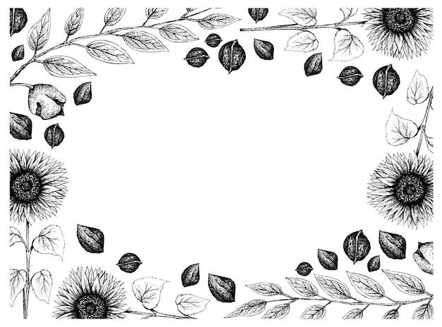 Cadre dessiné à la main de tournesols et de noix noires