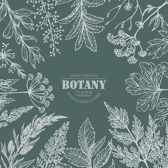 Cadre avec des éléments d'herbes et de fleurs sauvages dessinés à la main