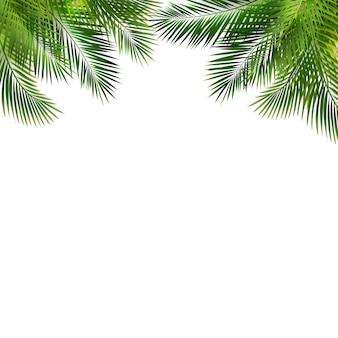Cadre avec feuille de palmier vert sur fond blanc