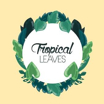 Cadre feuilles tropicales