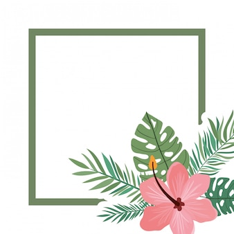 Cadre avec fleur et feuilles d'été