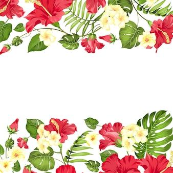 Cadre fleurs tropicales de plumeria et d'hibiscus