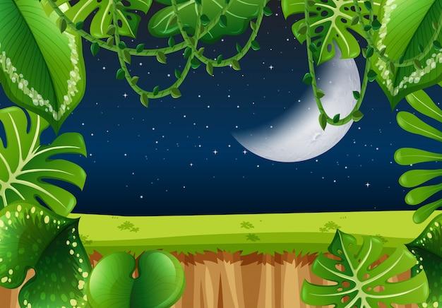 Cadre de la forêt la nuit