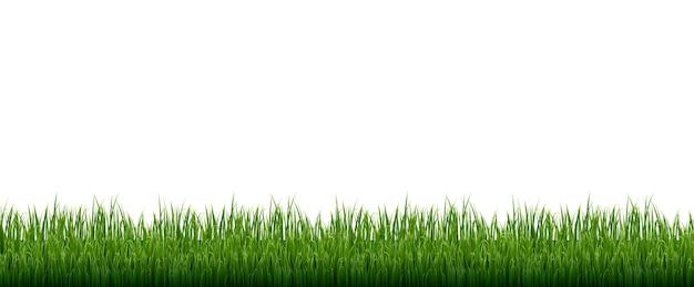 Cadre herbe verte sur fond blanc