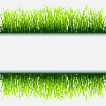 Cadre d'herbe verte