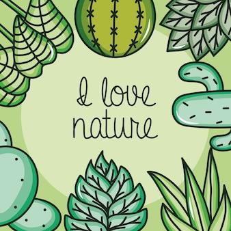 Cadre nature cactus et plantes exotiques