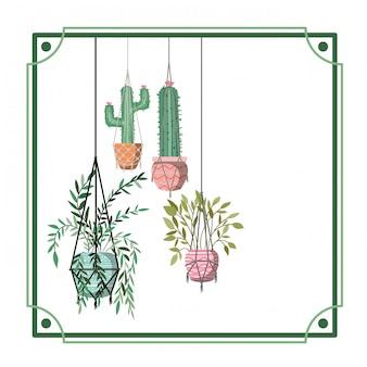 Cadre avec plantes d'intérieur sur des cintres en macramé