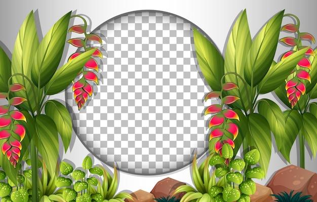 Cadre Rond Transparent Avec Modèle De Feuilles Tropicales Vecteur gratuit