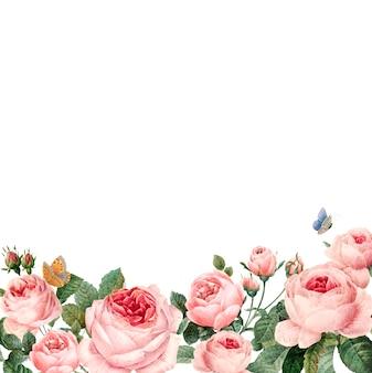 Cadre de roses roses dessinés à la main sur fond blanc
