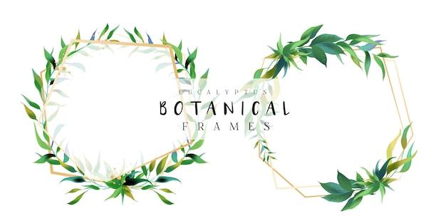 Cadres botaniques d'eucalyptus