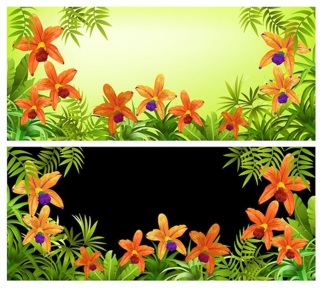 Cadres plantes, feuilles et fleurs d'orchidées.