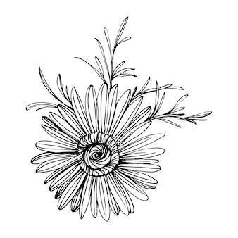 Camomille à la main dessin. daisy wheel floral dans le concept de style art en ligne. illustration de gravure vintage antique.
