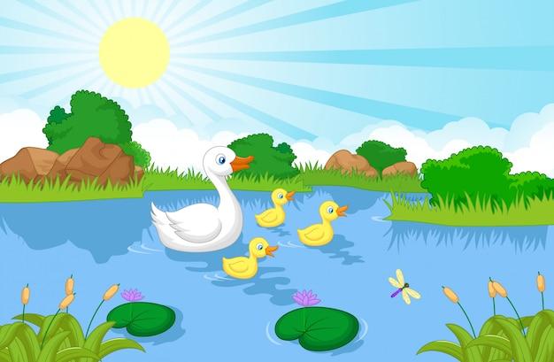 Canard, dessin animé, famille, natation