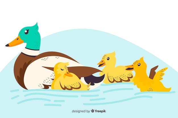 Canard mère plate et canetons dans l'eau