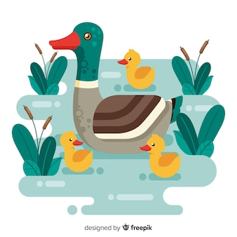Canard mère plate et canetons sur l'eau