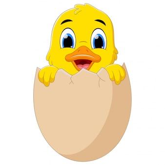 Canard nouveau-né jaune drôle dans une coquille d'oeuf cassé