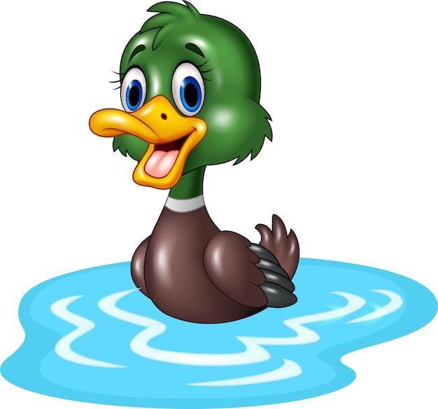 Les canards de bande dessinée flottent sur l'eau